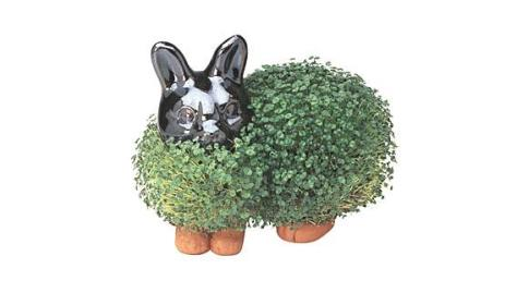 Chia-Pet-Bunny